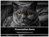 Free Black Cat PowerPoint Template Background, FreeTemplatesTheme