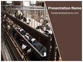 Free Dairy Farming PowerPoint Template Background, FreeTemplatesTheme