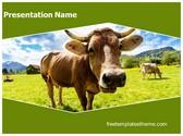 Free Farm Cow PowerPoint Template Background, FreeTemplatesTheme