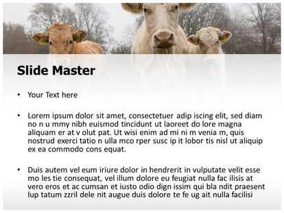 free farm cows powerpoint template