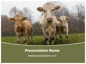 Free Farm Cows PowerPoint Template Background, FreeTemplatesTheme