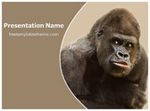 Free Gorilla PowerPoint Template Background, FreeTemplatesTheme