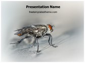 Free Mosquito Fly PowerPoint Template Background, FreeTemplatesTheme