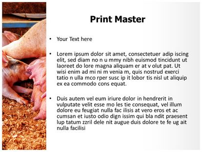 free pig farm powerpoint template