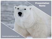 Free Polar Bear PowerPoint Template Background, FreeTemplatesTheme