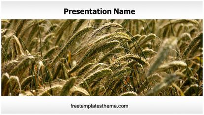 Ripe Wheat Field Free PPT Template Design Widescreen FreeTemplatesTheme