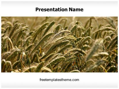 Ripe Wheat Field Free PPT Template Design freetemplatestheme.com