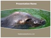Free Seal PowerPoint Template Background, FreeTemplatesTheme
