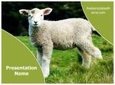 Free Sheep lamb PowerPoint Template Background, FreeTemplatesTheme