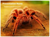 Free Spider PowerPoint Template Background, FreeTemplatesTheme