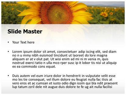Free Sunflower Field PowerPoint Template | freetemplatestheme.com