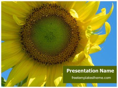 Free Sunflower PowerPoint Template | freetemplatestheme.com