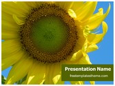 Free Sunflower PowerPoint Template Background, FreeTemplatesTheme