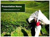Free Tea Plantation Agriculture PowerPoint Template Background, FreeTemplatesTheme
