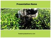Free Tea Plantation Farming PowerPoint Template Background, FreeTemplatesTheme