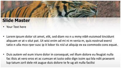 Free Tiger Powerpoint Template Freetemplatestheme Com